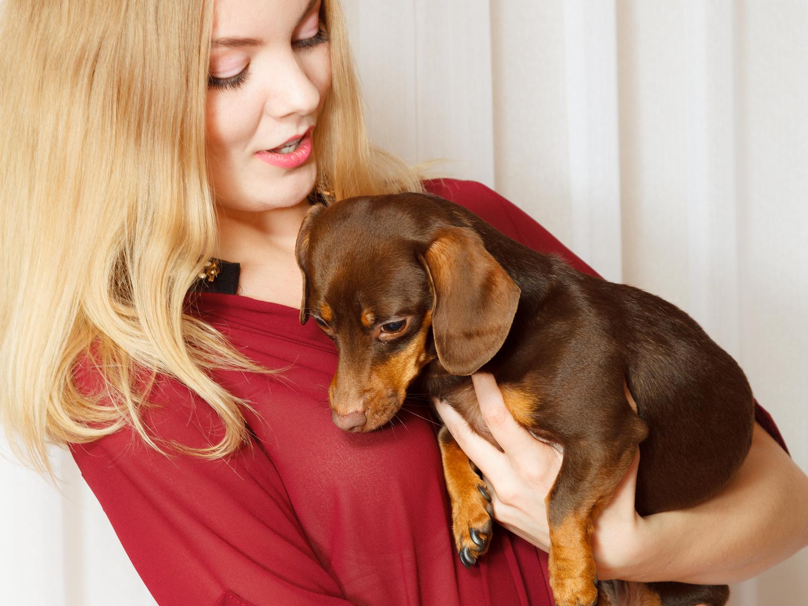 Pet Adoption – JVMS